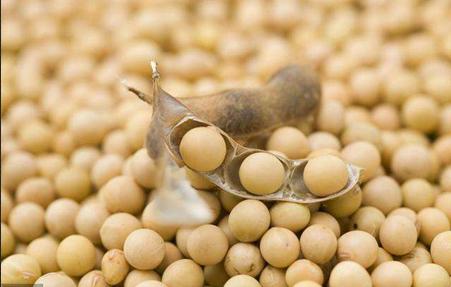 大豆期货手续费